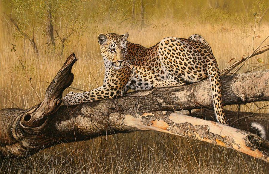 Leon Fouche' - Houston Safari Club