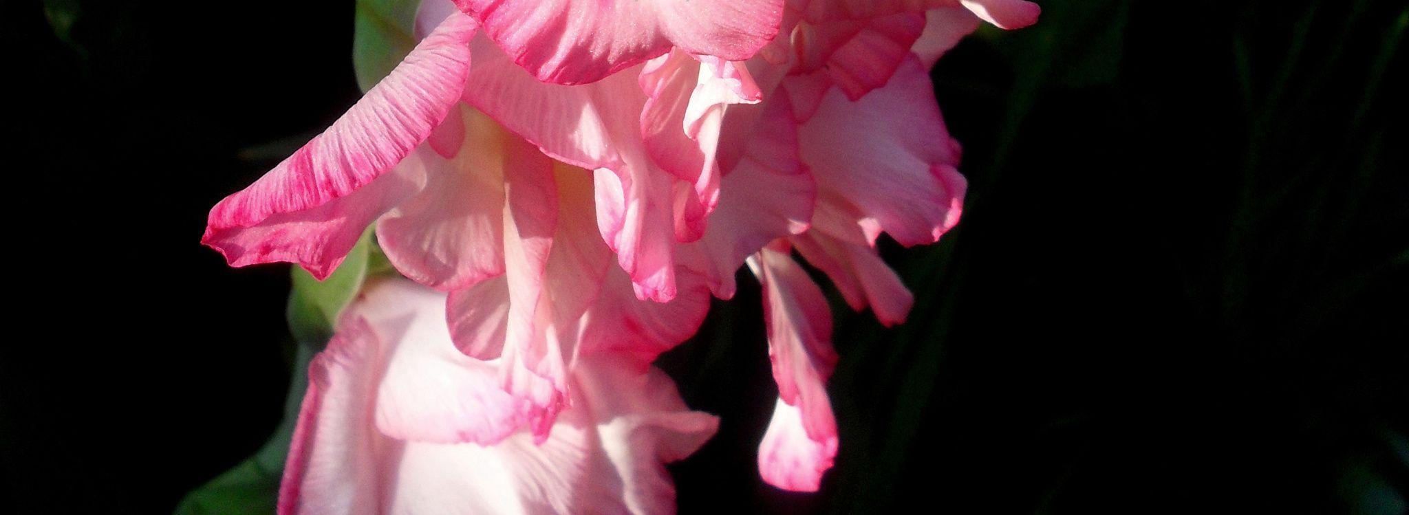 light - flower