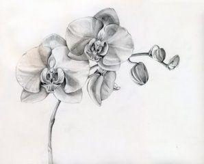 Noir Et Blanc Dessin Tatouage Tatouage Orchidee Et Tatouage Fleur
