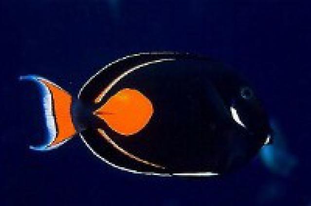Reef Safe Fish For Saltwater Aquariums Reef Safe Fish Saltwater Aquarium Saltwater Fish Tanks