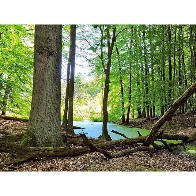 #nachhaltig #rausinsgrüne? Mit Naturtrip.org nach Brandenburg ins #weltnaturerbe #grumsin #Wald und #Moor! Mehr in unserem #Blog. Link in der Bio ☝️ #Ausflug #freizeit #ohneauto #berlin #klima #klimaschutz #umwelt #umweltfreundlich #natur #nature #naturelovers #naturliebhaber #outdoors #wandern #hike #reisen #travel #slowtravel #nachhaltigreisen