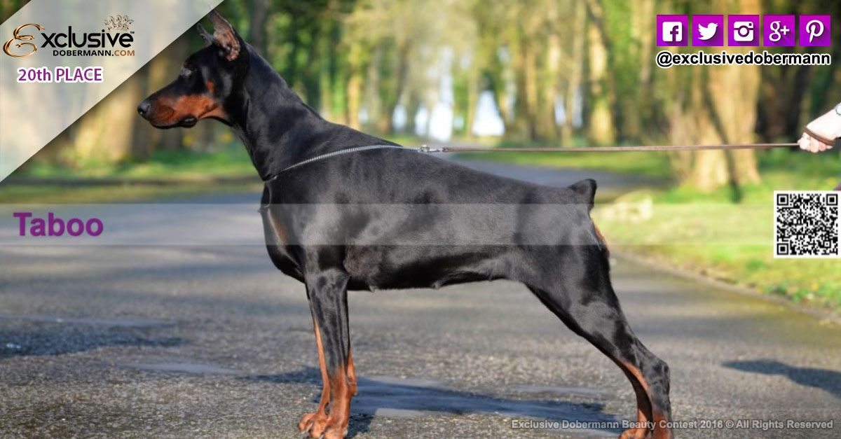 The Exclusive Dobermann Beauty Fashion Contest 2018 Ended Last