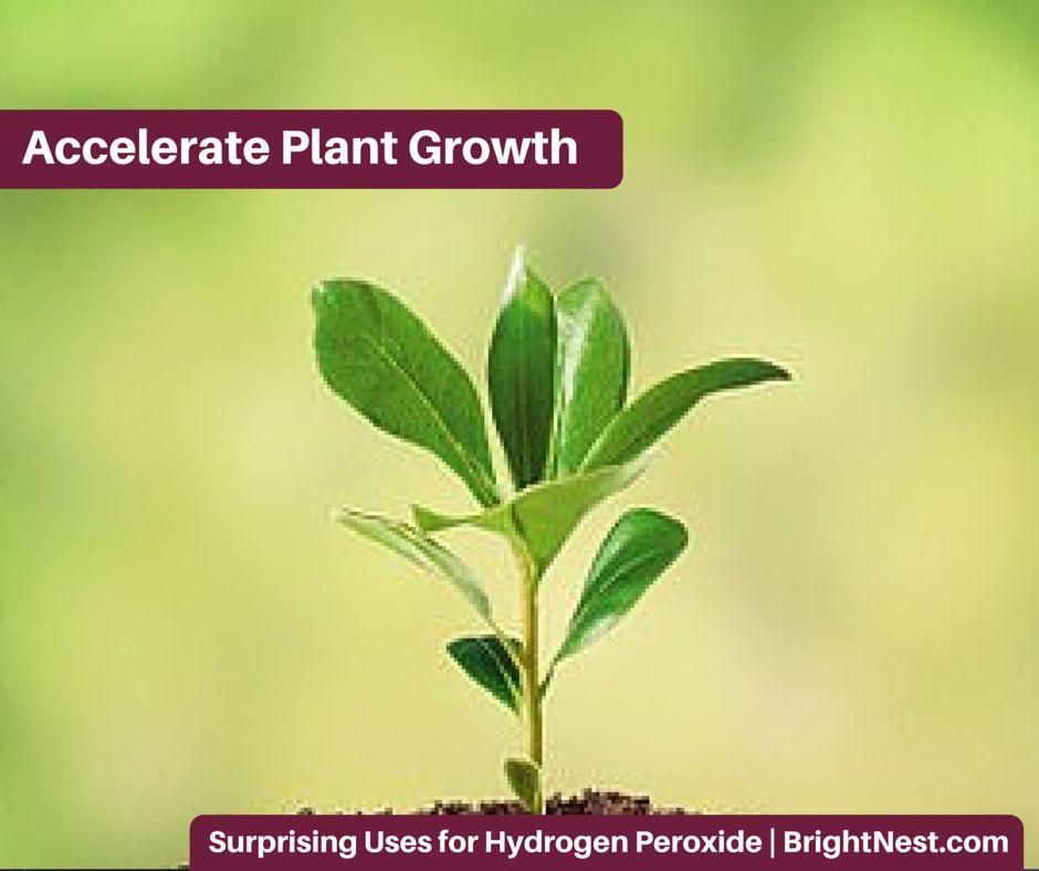 9 Surprising Uses for Hydrogen Peroxide Plants, Hydrogen