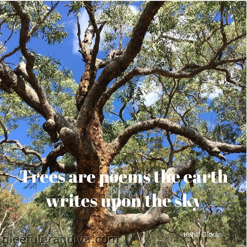 TALK TO THE TREES – THEY JUST MIGHT ANSWER! - gleeful grandiva