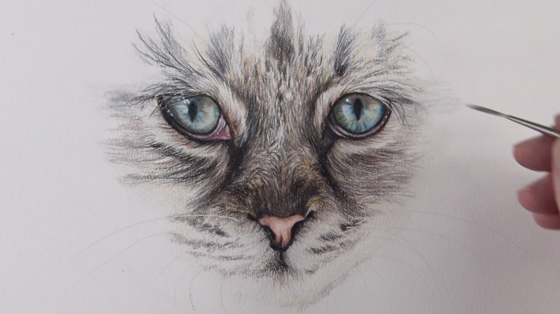 How to Draw Cat Eyes with Colored Pencils | Eye drawing ...
