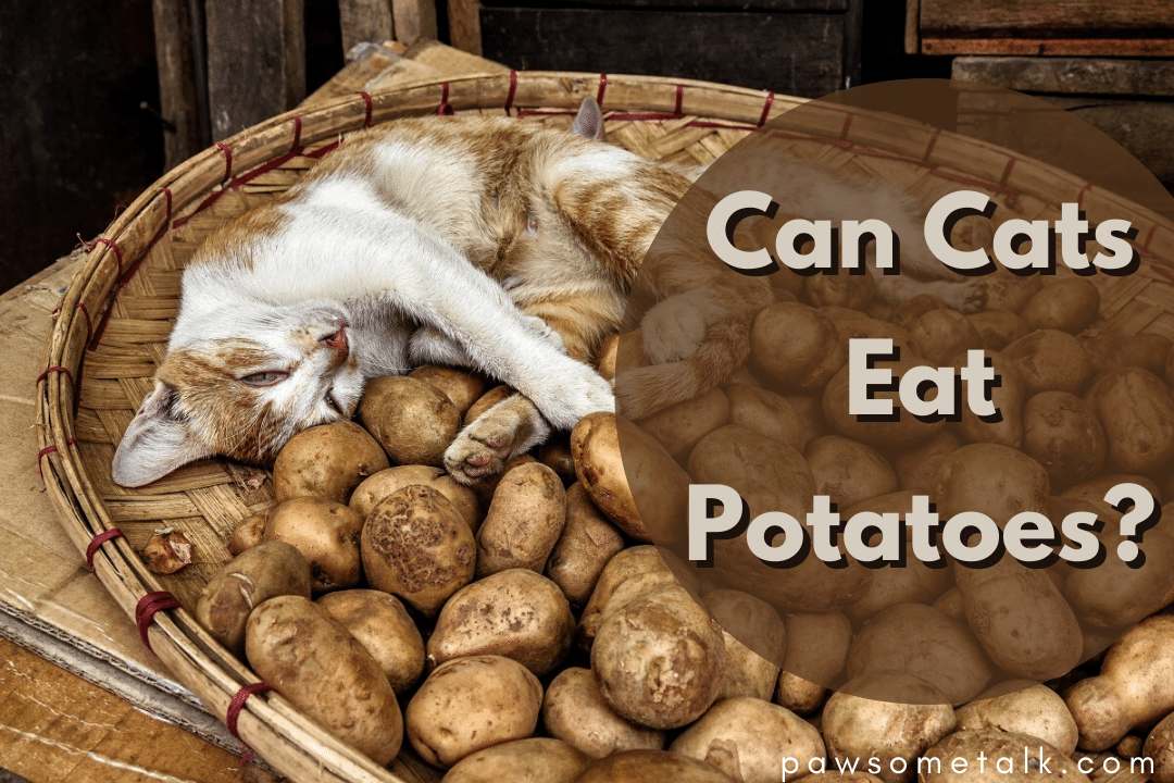 What do cats eat? Can Cats Eat Potatoes? Owning a cat