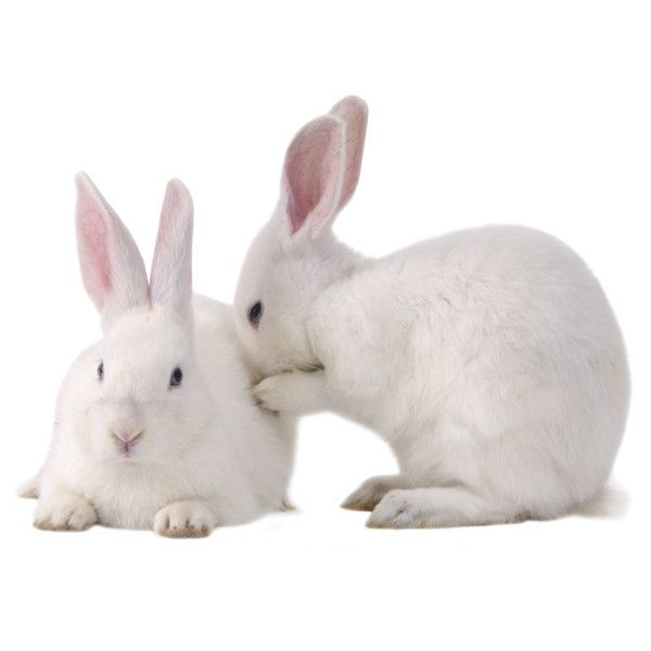 Rabbits Png Found On Polyvore Animals Rabbit Pictures Rabbit Photos