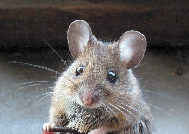 How To Get Rid Of Mice In The Garage Funny Animals Funny Animal Memes Haha Funny
