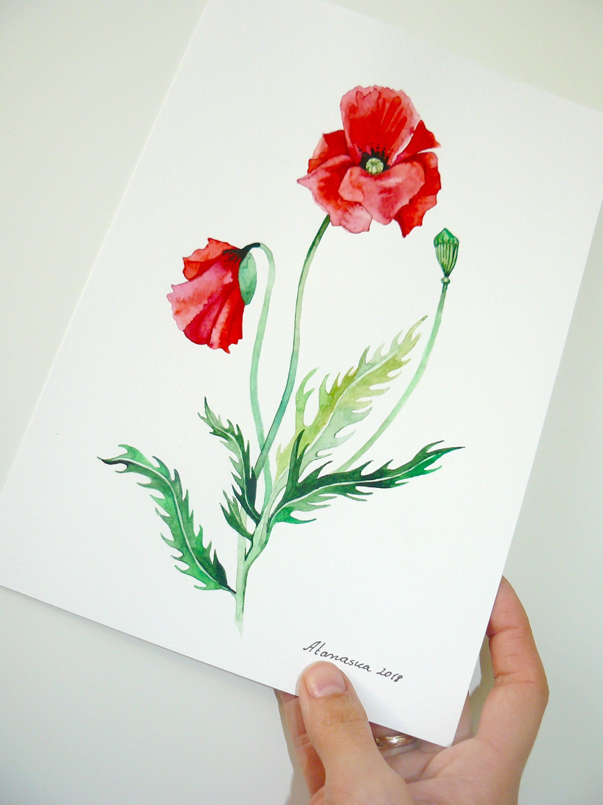 Poppy Flower Painting Original Watercolor Red Poppies Poppy