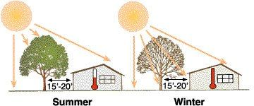 Landscaping for an Energy Efficient Home #energyefficiency