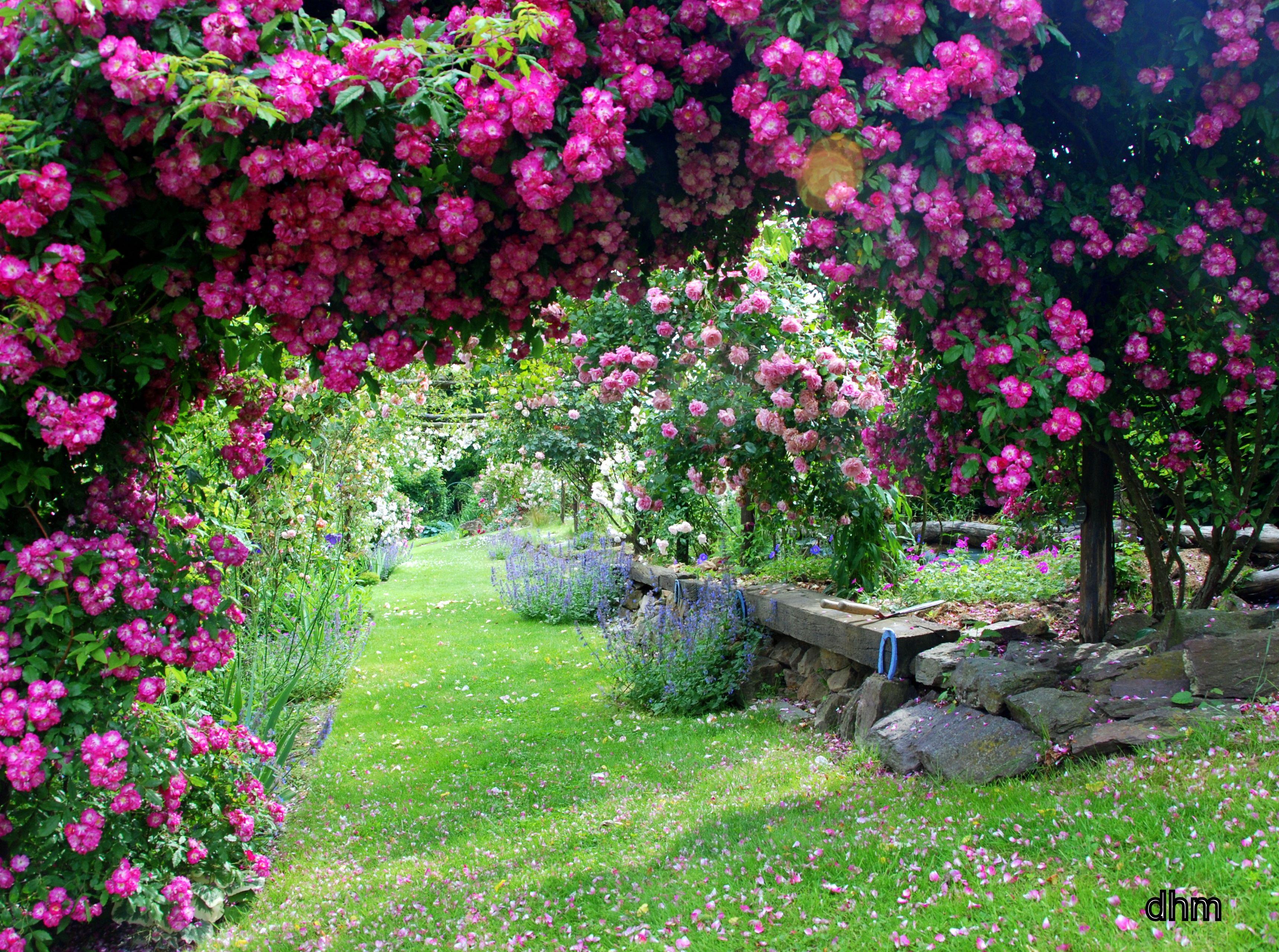 jardin magnifique lilo du jardin au paysage. Black Bedroom Furniture Sets. Home Design Ideas
