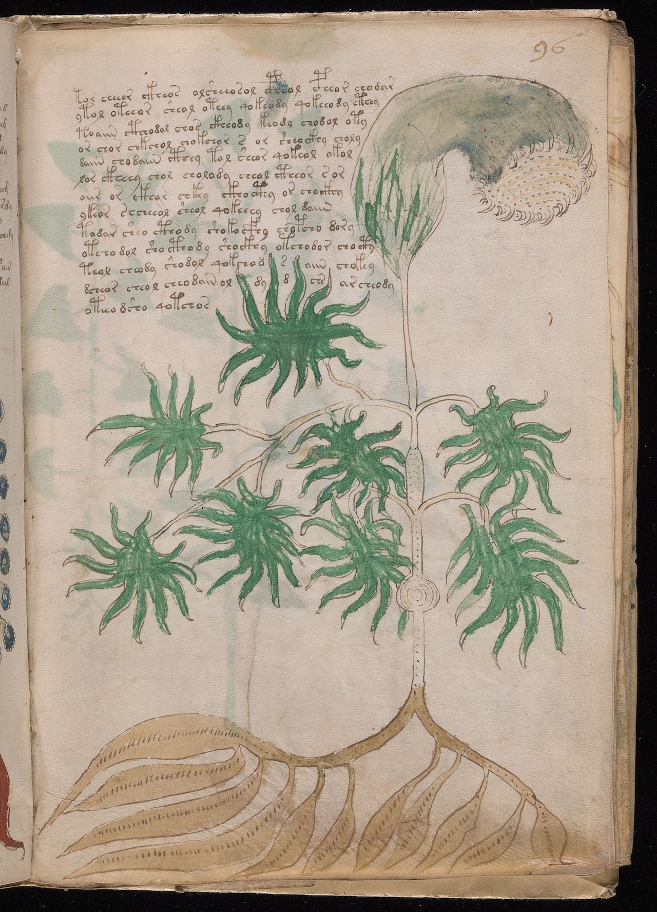 voynich datingfull hookup campgrounds near mount rushmore