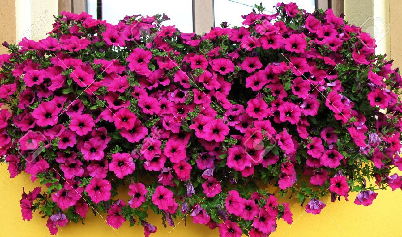 5 Piante Perfette Per Un Terrazzo Al Sole Giardinaggio Sul