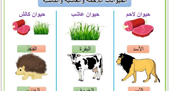 Resultat De Recherche D Images Pour بحث حول الحيوانات اللاحمة والعاشبة و الكالشة