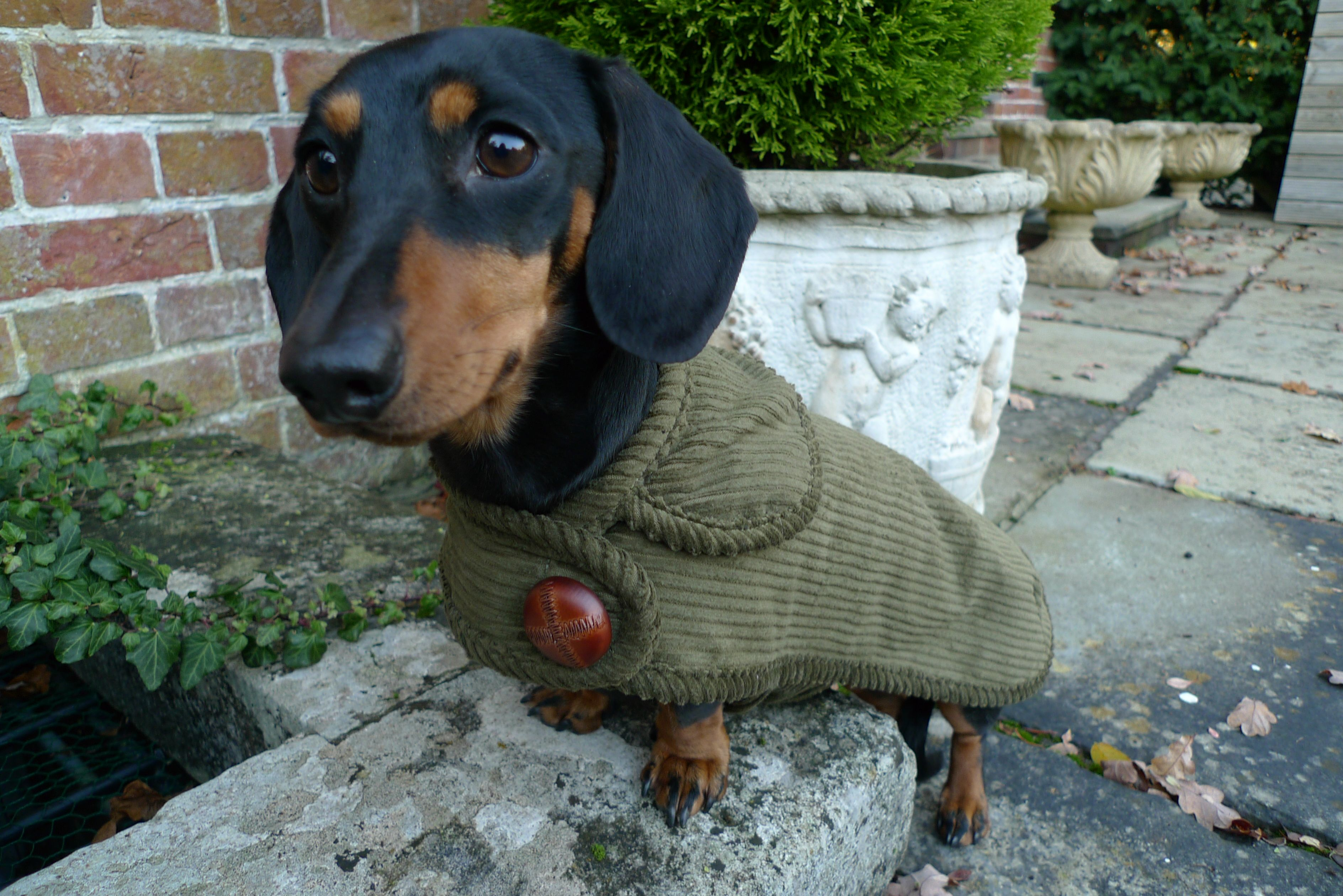 The Highgrove Dachshund Coat Dachshund Clothes Dachshund Dog