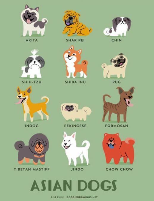 Identifying Dog Breeds Pt 10 ภาพวาดส น ข พ นธ ส น ข ส ตว น าร ก