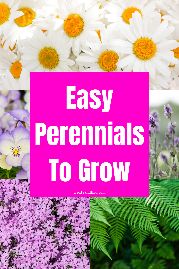 Stress Free Low Maintenance Perennials You Ll Love Perennials