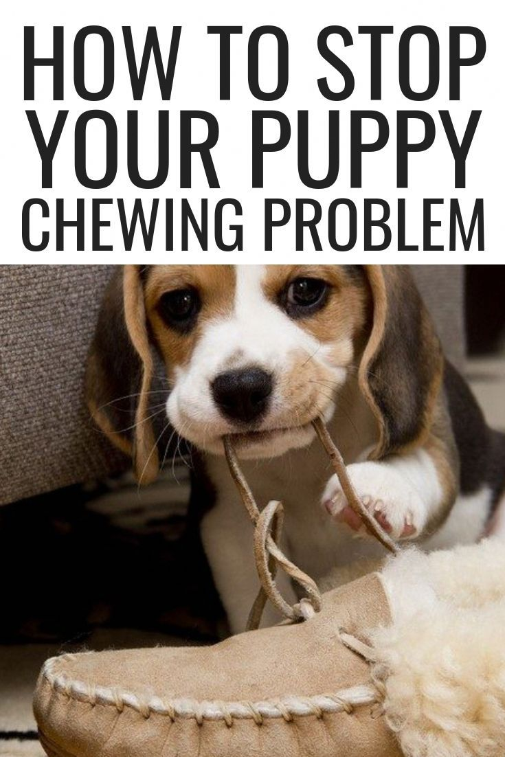 How to Stop Your Puppy Chewing Problem, puppy stop biting