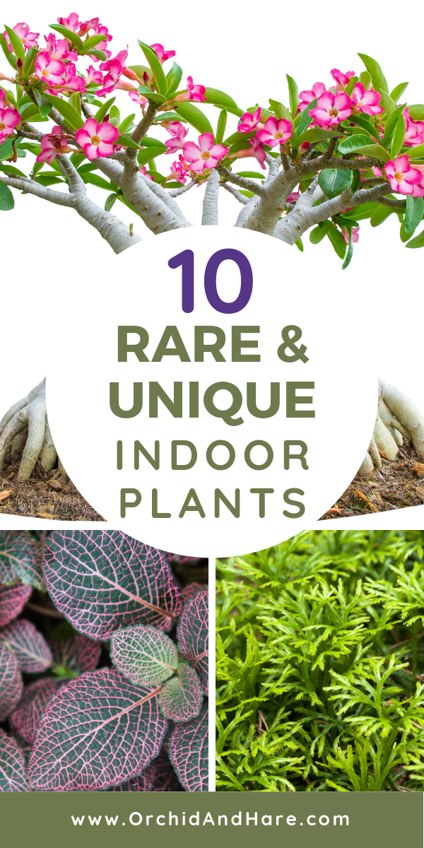 10 Rare Unique Houseplants You Will Love Includes Care Instructions Plants House Plants Indoor Easy Plants