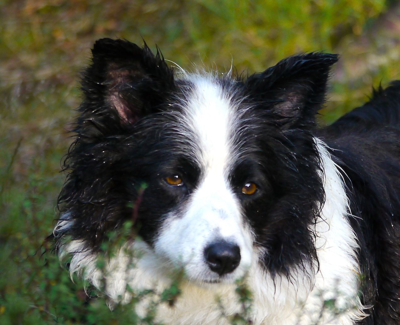 Posts About Uncategorized On John And Jane In New Zealand Border Collie What Dogs Sheepdog