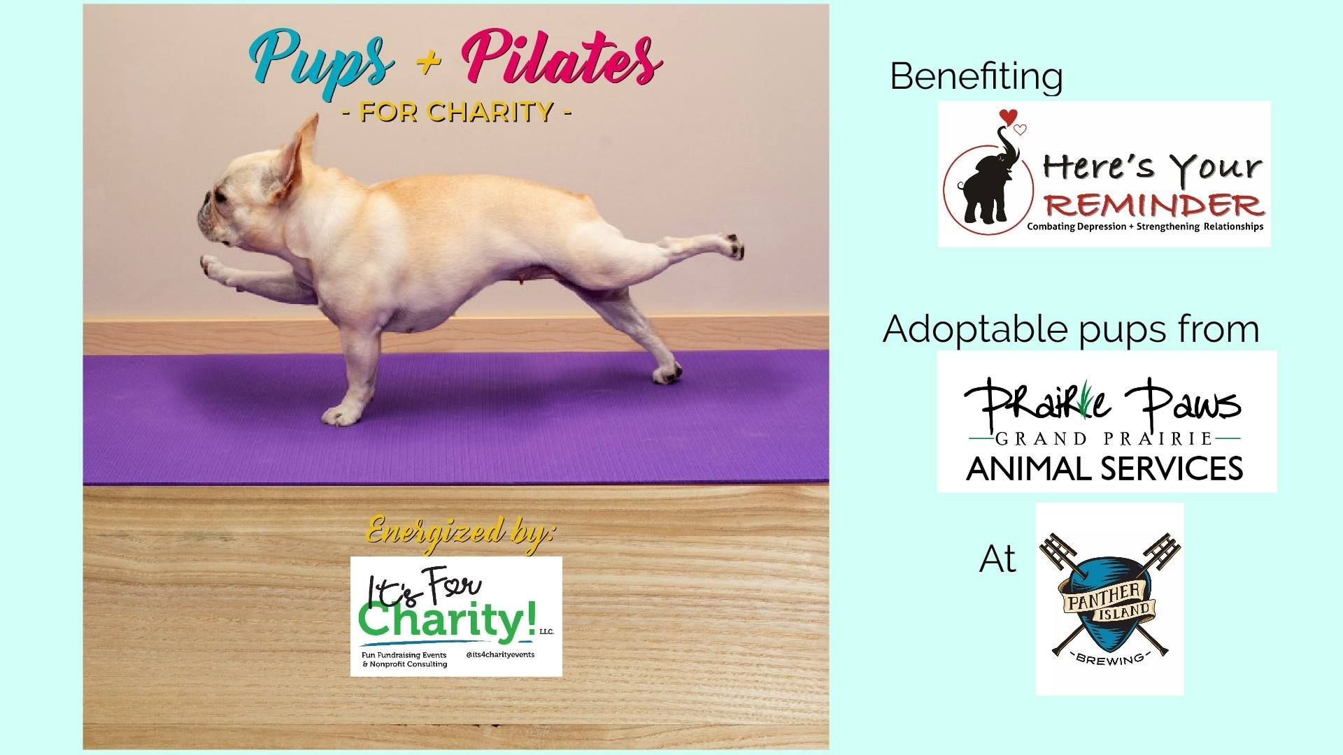 **Indoor Class** What do dogs & Pilates have in common
