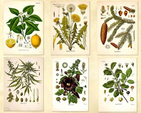 The entire set of 88 Plant illustrations in by OldPrintARTdigital