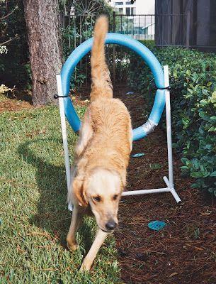 I'm Gonna Be a SuperDog: DIY Agility   Dog agility course ...