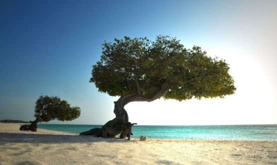 White Sand Beaches in Aruba
