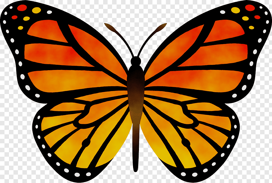Monarch Butterfly Drawing Silhouette Web Design Orange Cartoon Lepidoptera Moths And Butterfli Butterfly Drawing Butterfly Painting Silhouette Butterfly