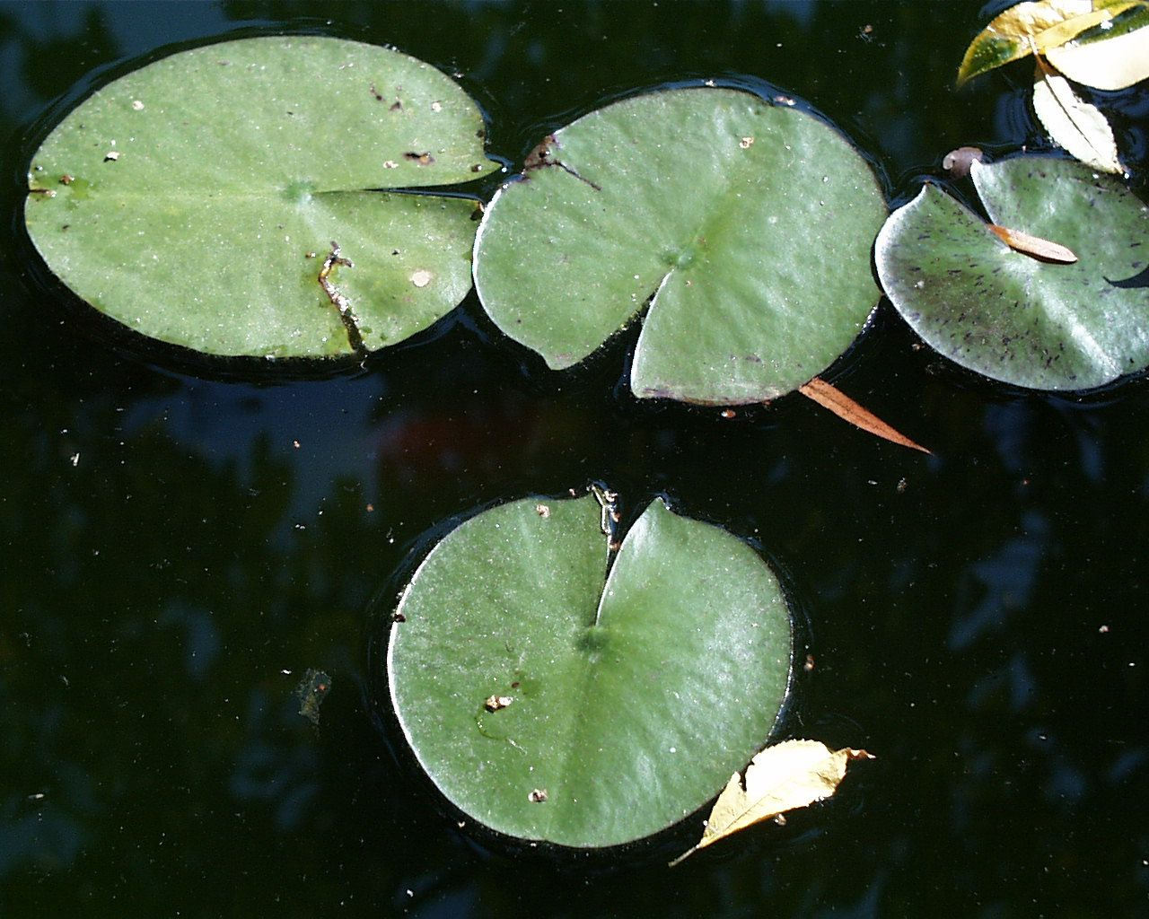 Lily Pad Spitting Art Quilts Pinterest