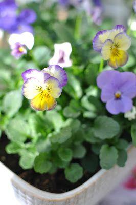 Bratte bakka og grøne lier: Vårførebuing