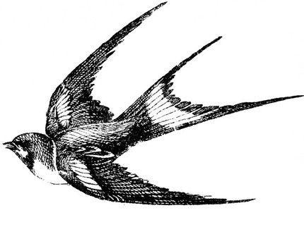 Sparrow Drawing Tatu Lastochka Lastochki Shablon Tatu