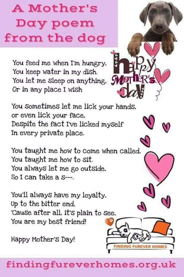 Mothers day poem from dog | Dogs make our life better | Dogs, Dog