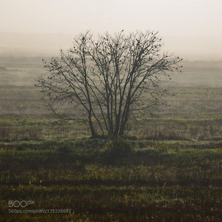 misty morning - Pinned by Mak Khalaf Nature  by lucamoriconi