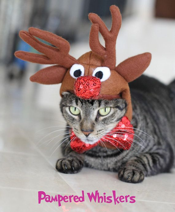 Cat Dog Reindeer Costume Rudolph The Red Nosed Reindeer Hat Etsy Cat Christmas Costumes Christmas Cats Reindeer Costume
