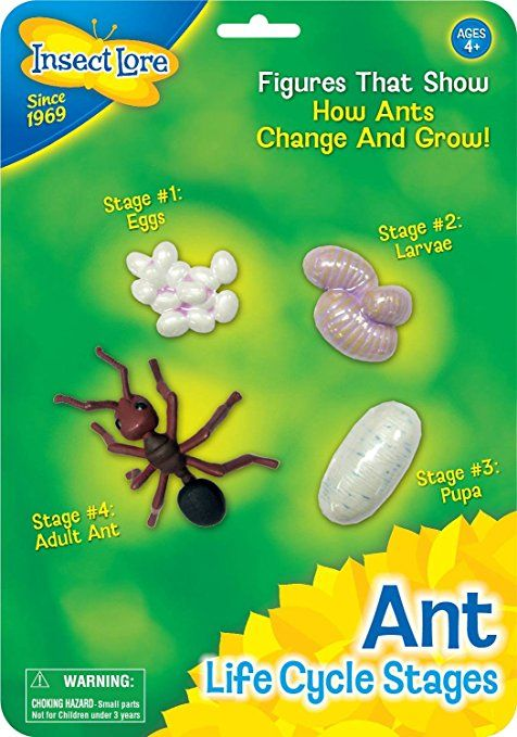 Ant Life Cycle Toy 4 Piece Set Shows Life Cycle Of An Ant With
