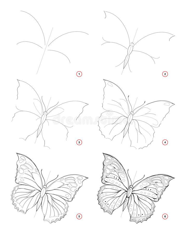 How To Draw Sketch Of Beautiful Fantastic Butterfly. Creation Step By Step Pencil Drawing. Education For Artists. Stock Vector - Illustration of activity, paint: 168843768