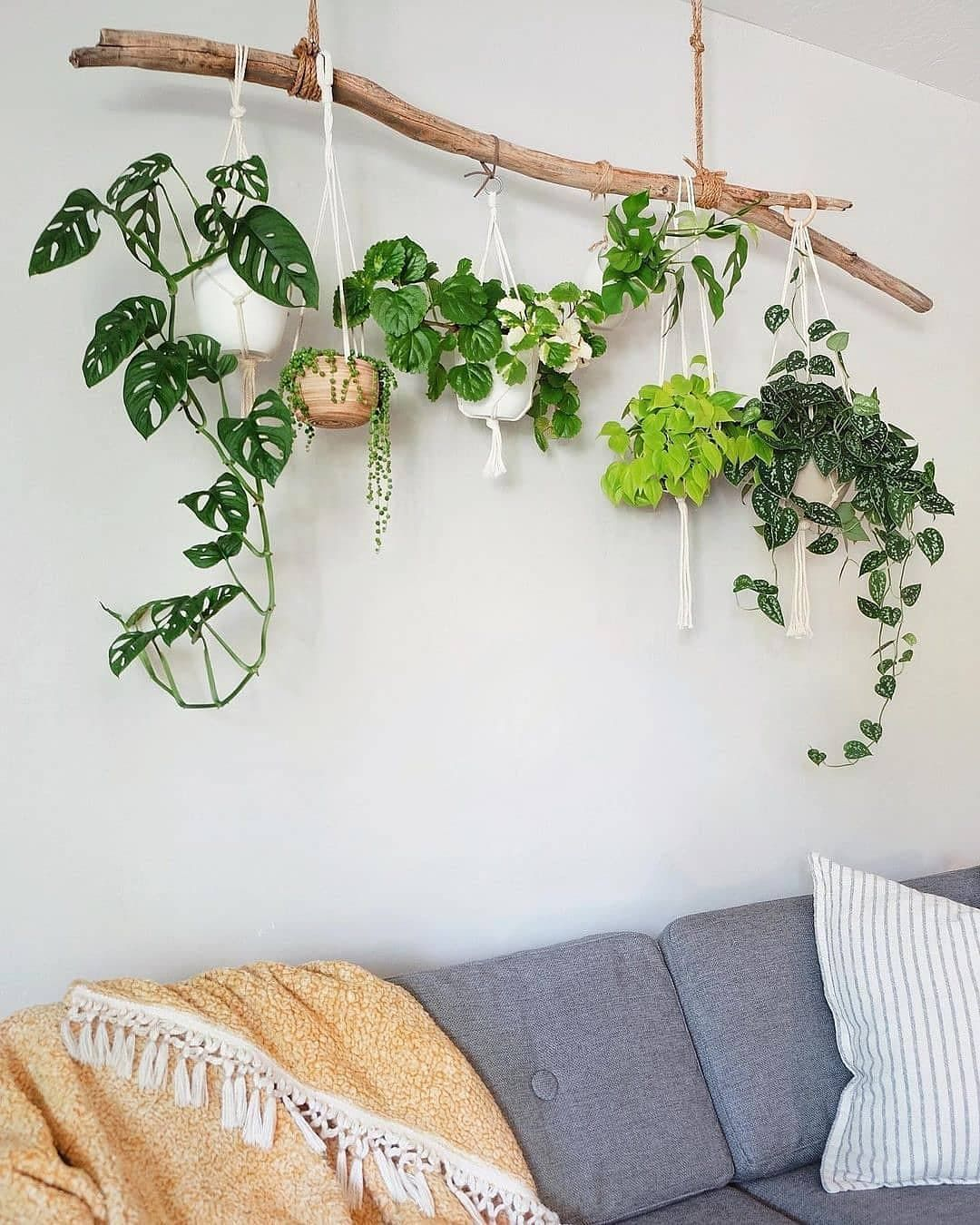 """Plantcubby on Instagram: """"Follow us for inspiration and to spread the love of beautiful Indoor Plant Decor 🌿  🌿 @plantcubby  _______________________ 😍 Follow:…"""""""