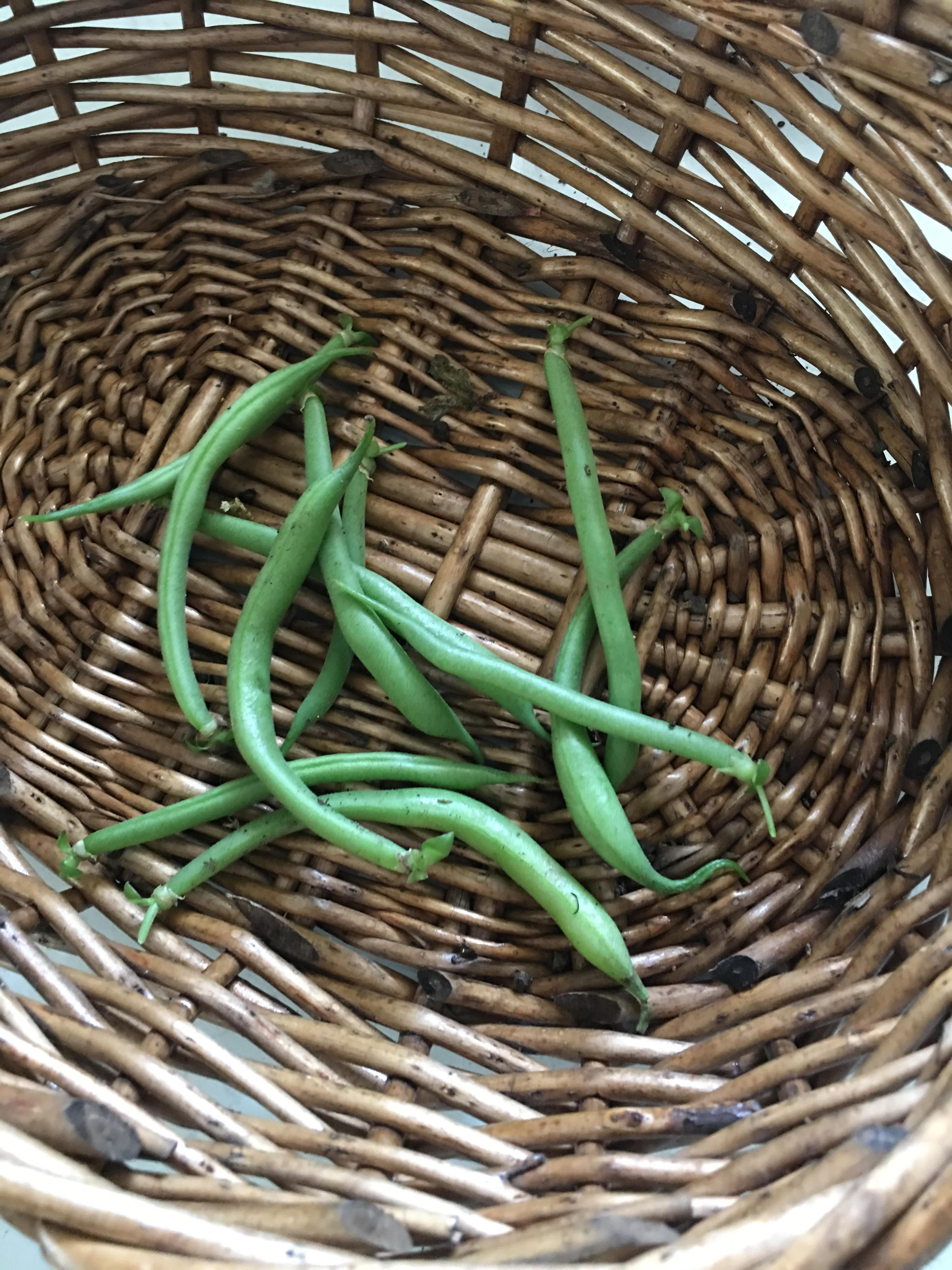 My first harvest of strike beans. First year growing everything from ...