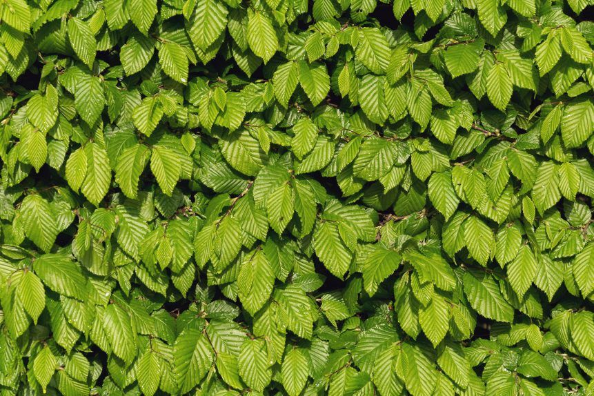29++ Leaves stock ideas