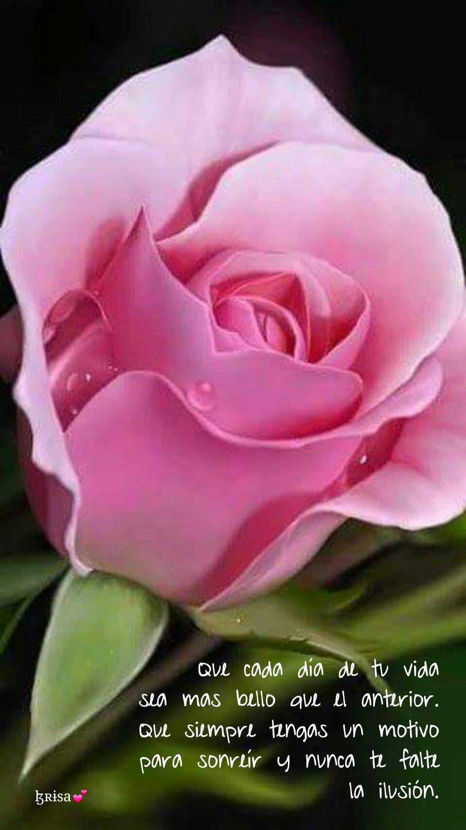 Pin by Subha on Gardens Flowers, Hybrid tea roses