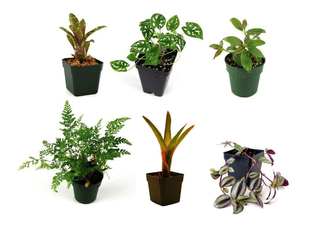 10 Gallon Tropical Vivarium Plant Kit Regular Price 29 94
