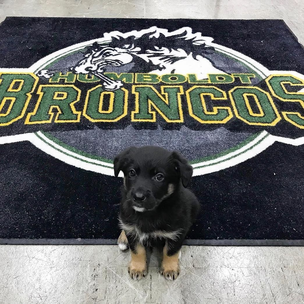 "TSN on Instagram ""Meet Bronco, the new team dog of the"