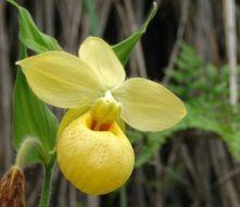 orquideas blancas - Buscar con Google