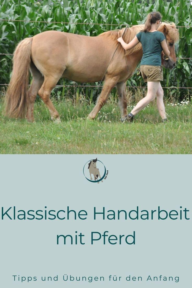 Klassische Handarbeit Mit Pferd Tipps Und Ubungen 360 Pferd In 2020 Pferd Pferde Training Clickertraining