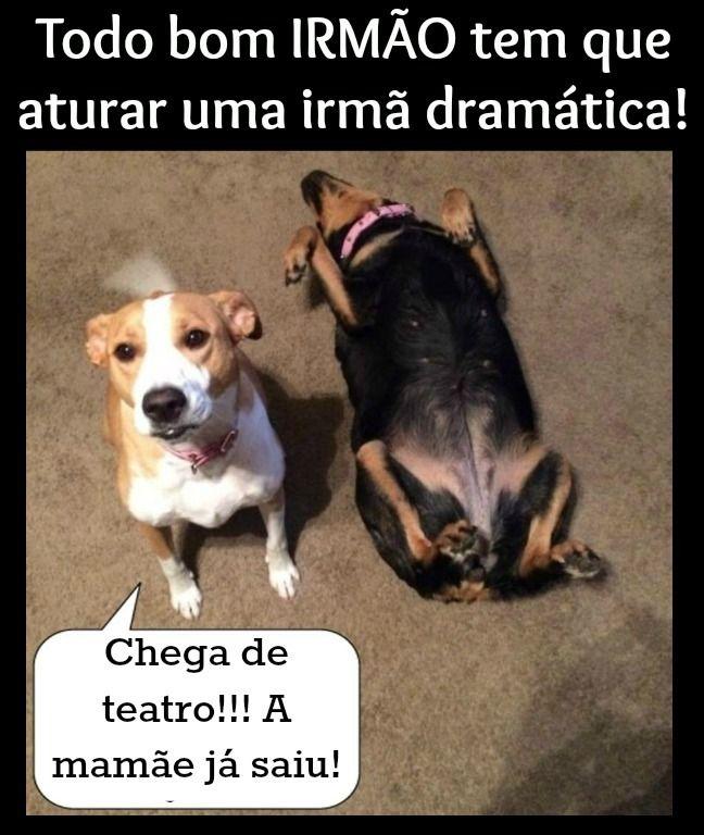 Haja Paciência Hahahaha Humor Humor Animal Cães