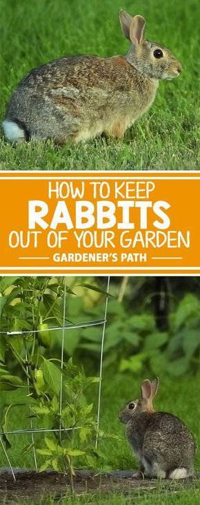 How to Keep Rabbits Out of Your Garden | Garden pests ...