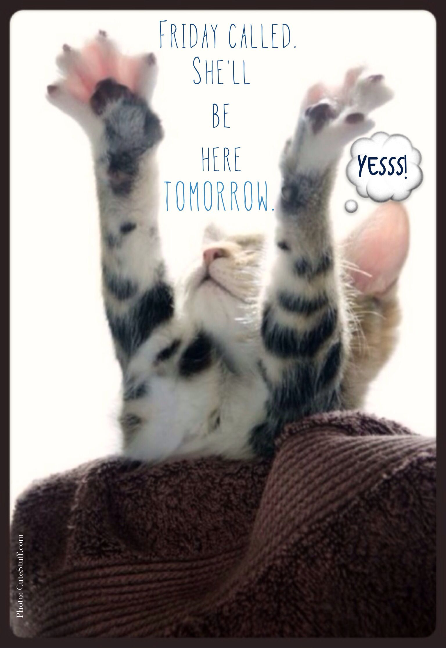 Thursday humor Cat funny Cute Almost Friday Can't