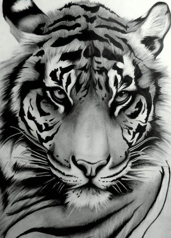 Here is another of my most recent Tigers. I finished it a while ago but havent h