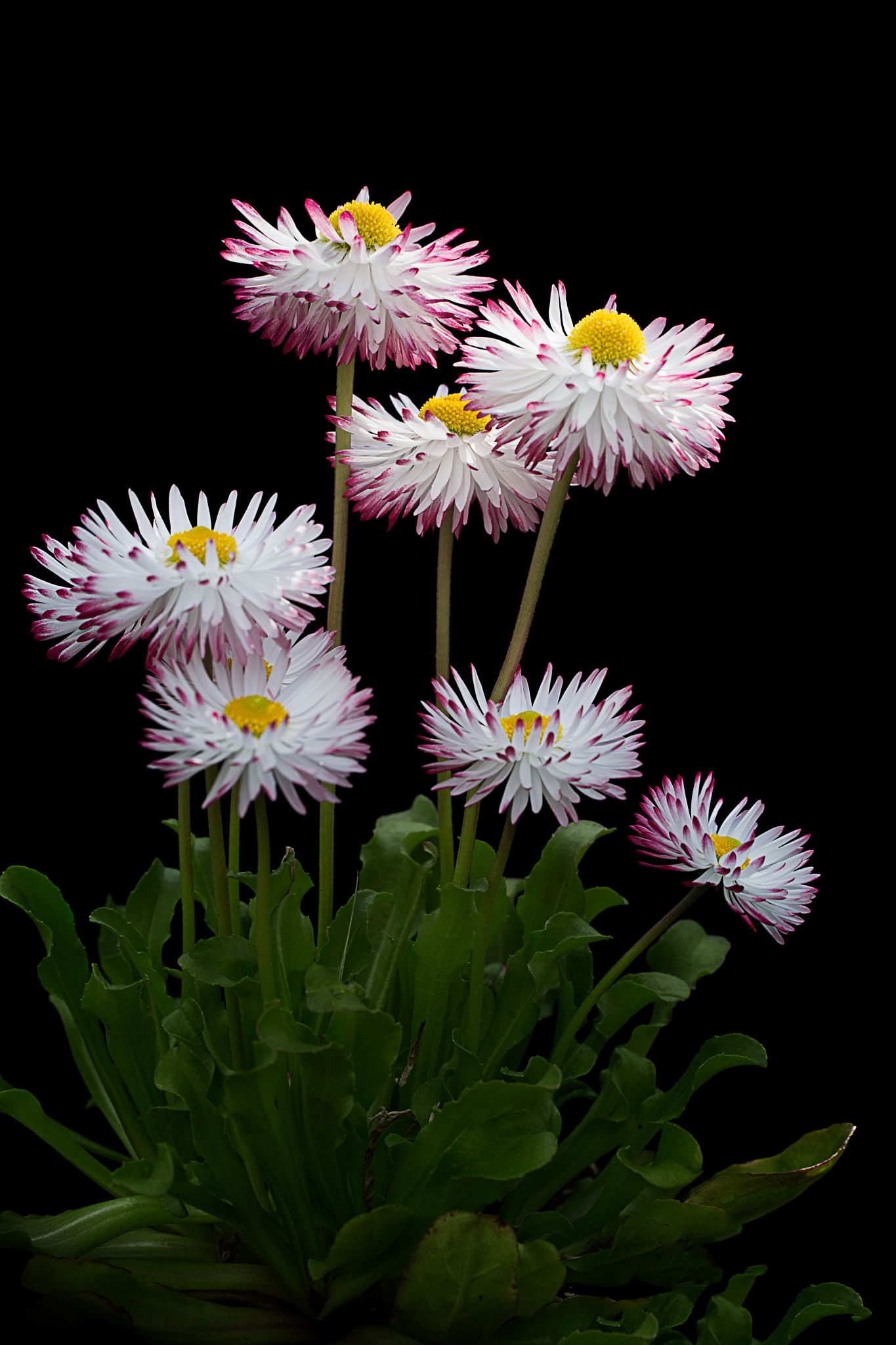Spring Dance by Padma Inguva on 500px (With images